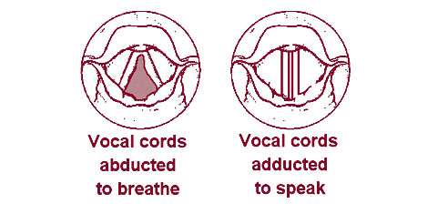 声帯 発声