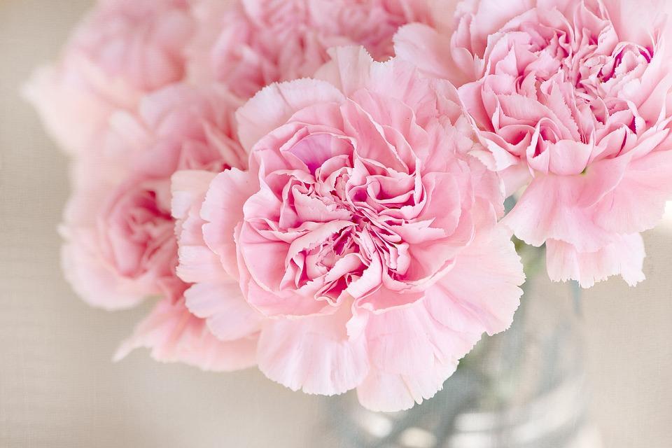 flowers-1325012_960_720